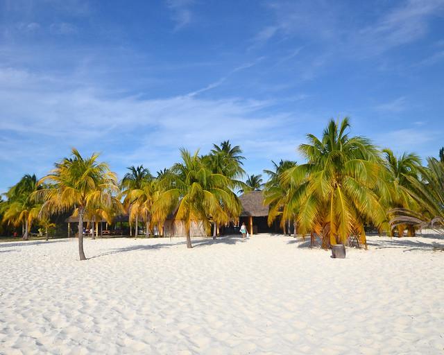 Palmeral de Playa Sirena junto a la arena de la playa