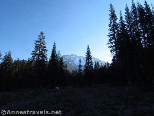 Very early morning on the Bunny Flat Trail up to the Horse Camp, Shasta-Trinity National Forest, California