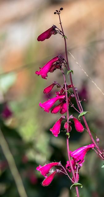 Flower-22-7D2-041217