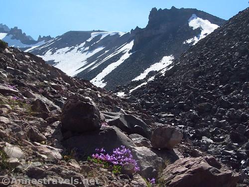 Wildflowers in Hidden Valley, Shasta-Trinity National Forest, California