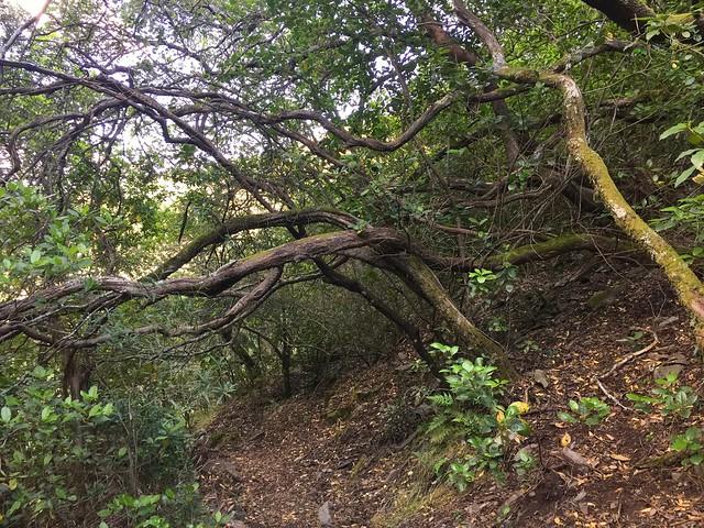 Bosque en Las Hurdes próximo a la Chorrera de Arrobatuequillas (Las Hurdes, Cáceres)
