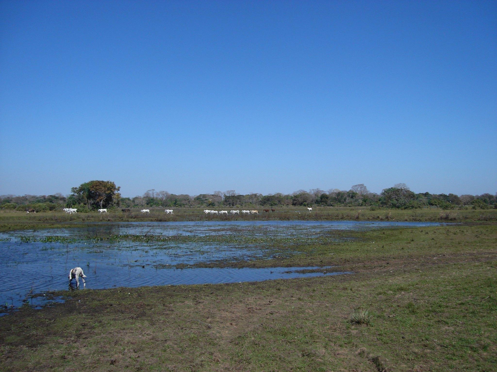 Pantanal perde 13% das matas em 15 anos