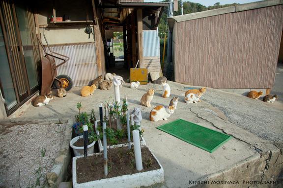 gatos aijima