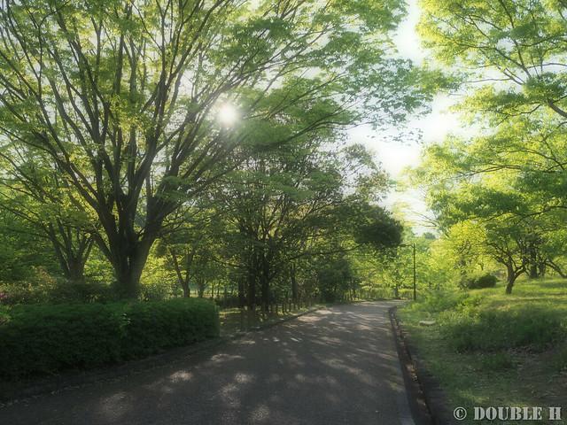 Umami Kyuryo Park 2017.4 (24)