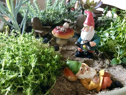 Gnomes in the garden | by konarheim