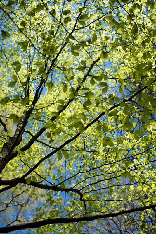 Bøkeskogen mat og natur 05