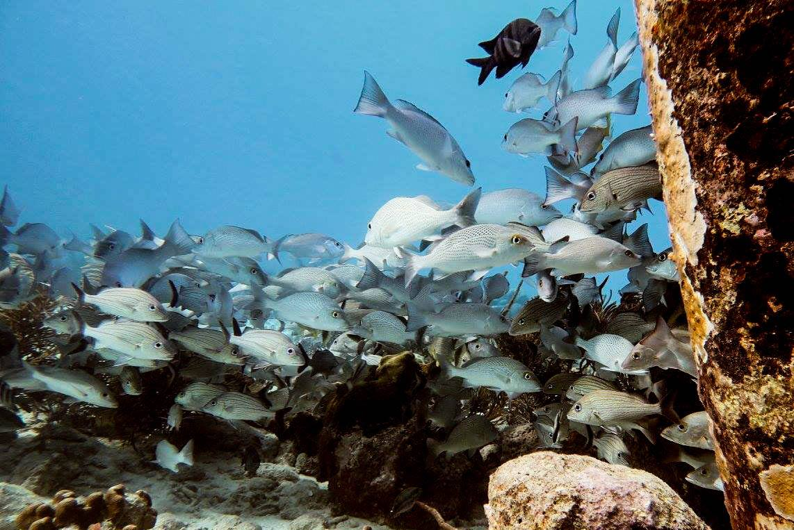 scuba diving in Bonaire