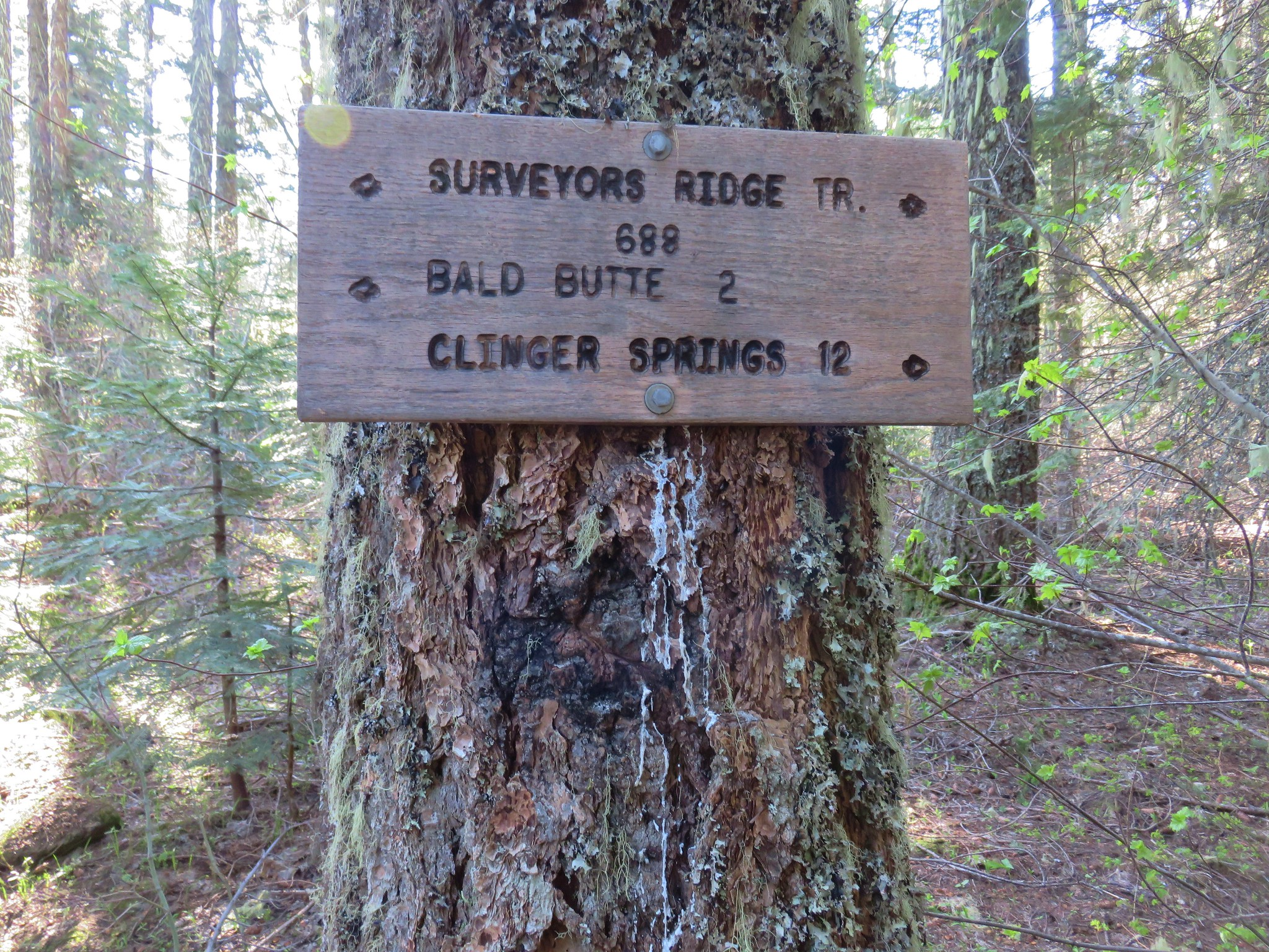 Surveyor's Ridge Trail sign