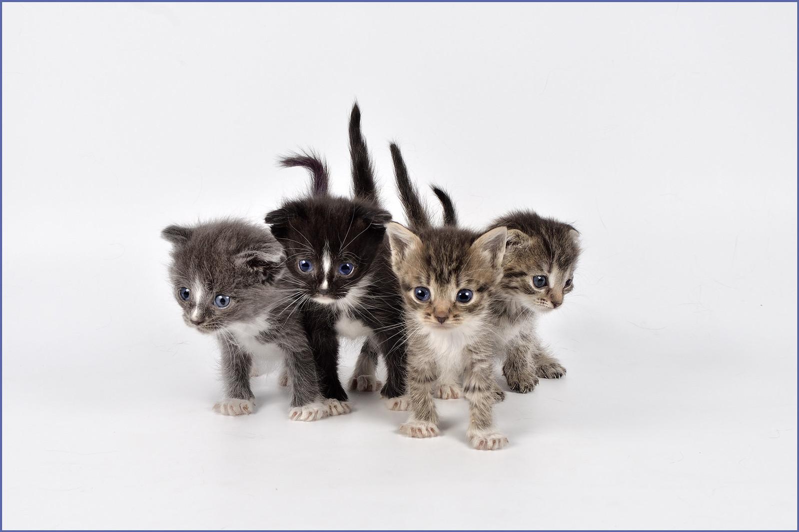 фотограф анималист Челябинск - фото кошек в Челябинске