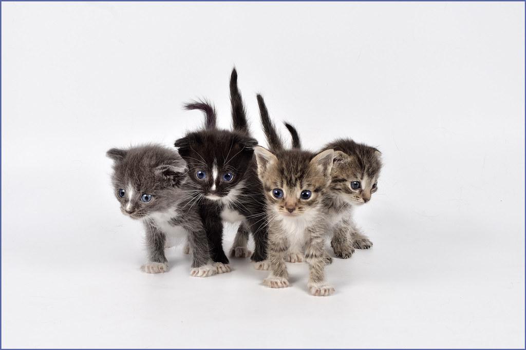 фото кошки - фотограф анималист в Челябинске 004