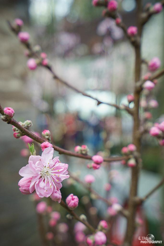 Blossom Bliss - 013