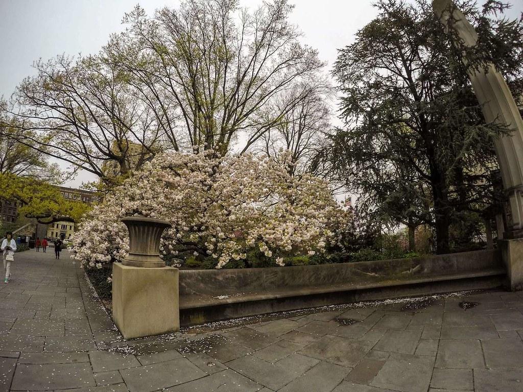 Brooklyn Botanic Garden entrance April 2017