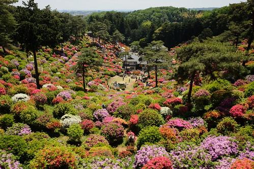 Shiofune Kannon temple Azalea Festival 2017 23