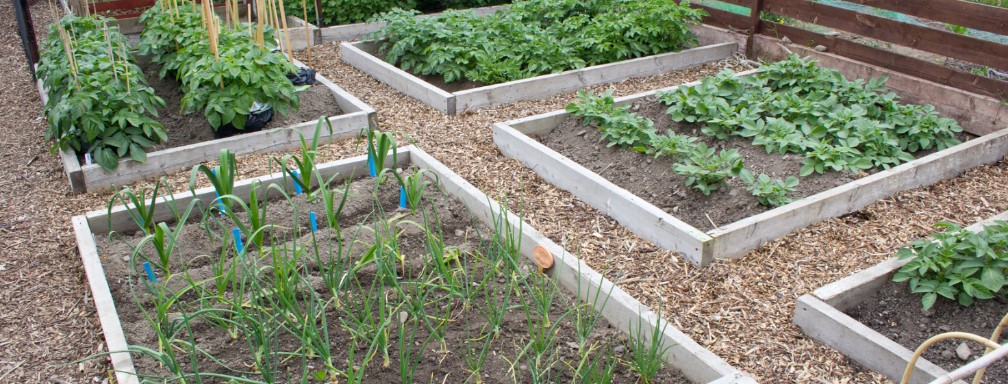 Aparment Community Food Garden