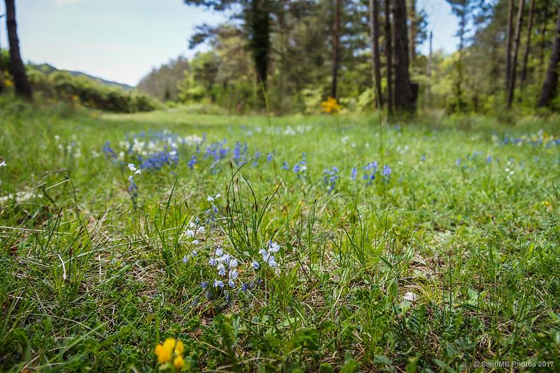 Florecillas azules a la sombra de los árboles