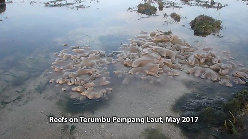 Living reefs of at Terumbu Pempang Laut, May 2017