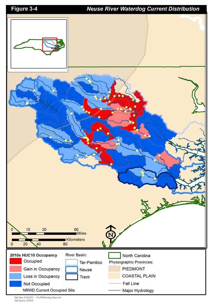neuse river waterdog current occupancy by usfws southeast
