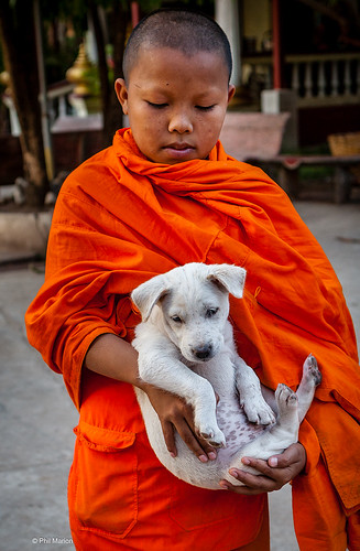 Novice monk and puppy - Luang Prabang, Laos | by Phil Marion