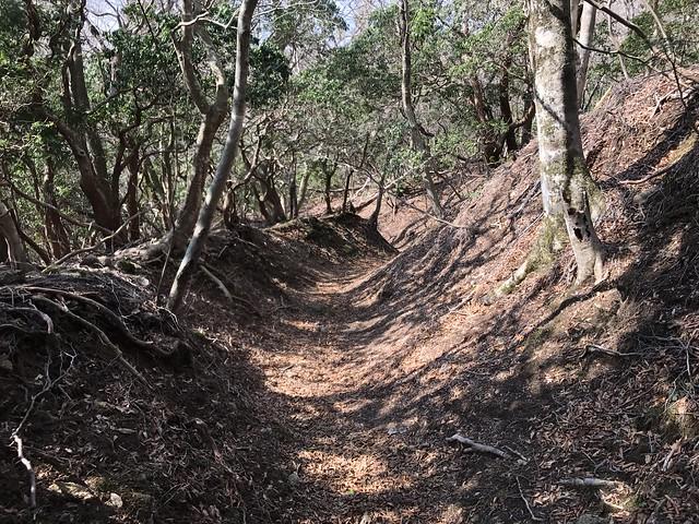 野登山 表参道への道