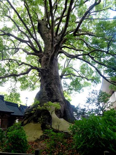 jp-fuk-region-dazaifu-temple Tenmangu (7)