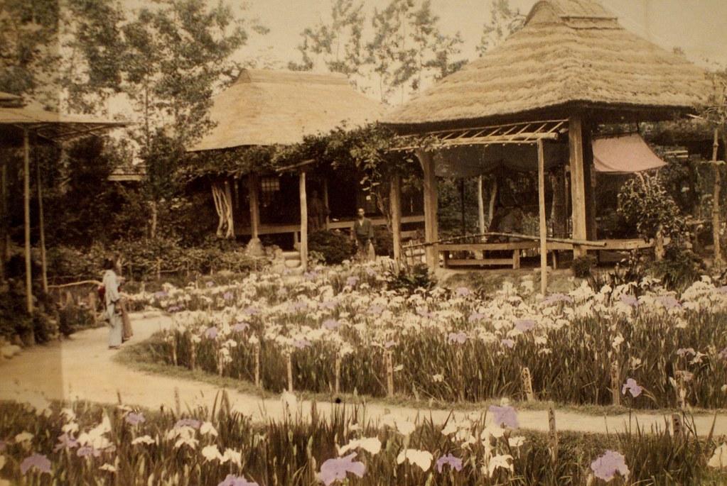 Temple et iris à Kyoto au Japon début 1900 (?).