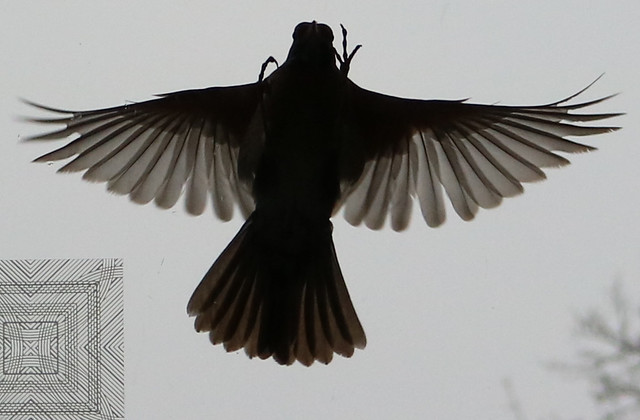 silhouette with wings outstretched, tail down, feet up