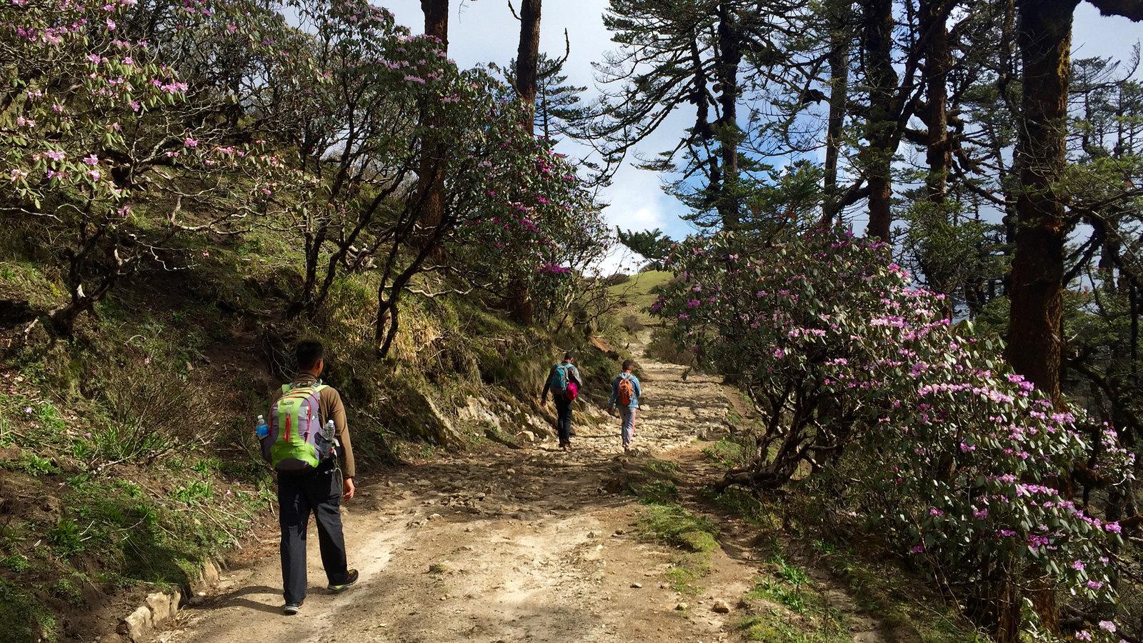 sandakphu to phalut trail
