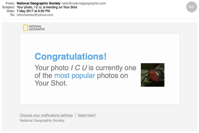 Your photo I C U is trending on Your Shot
