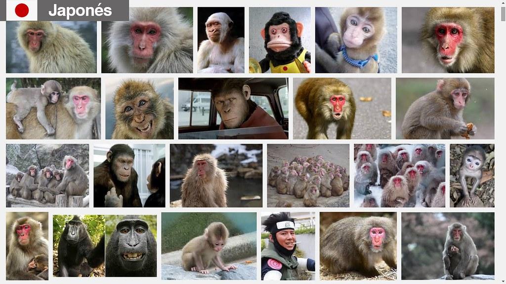 Búsqueda de monos en japonés