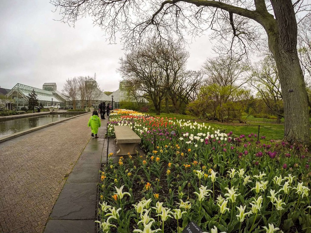 Brooklyn Botanic Garden pond area 2