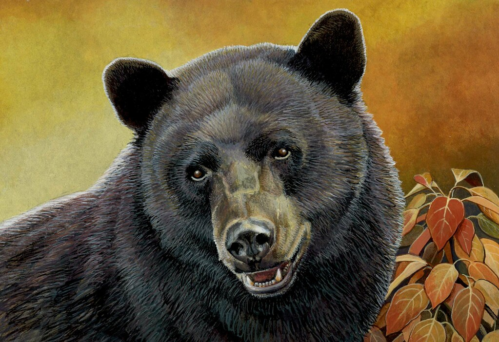 Photo of black bear stamp