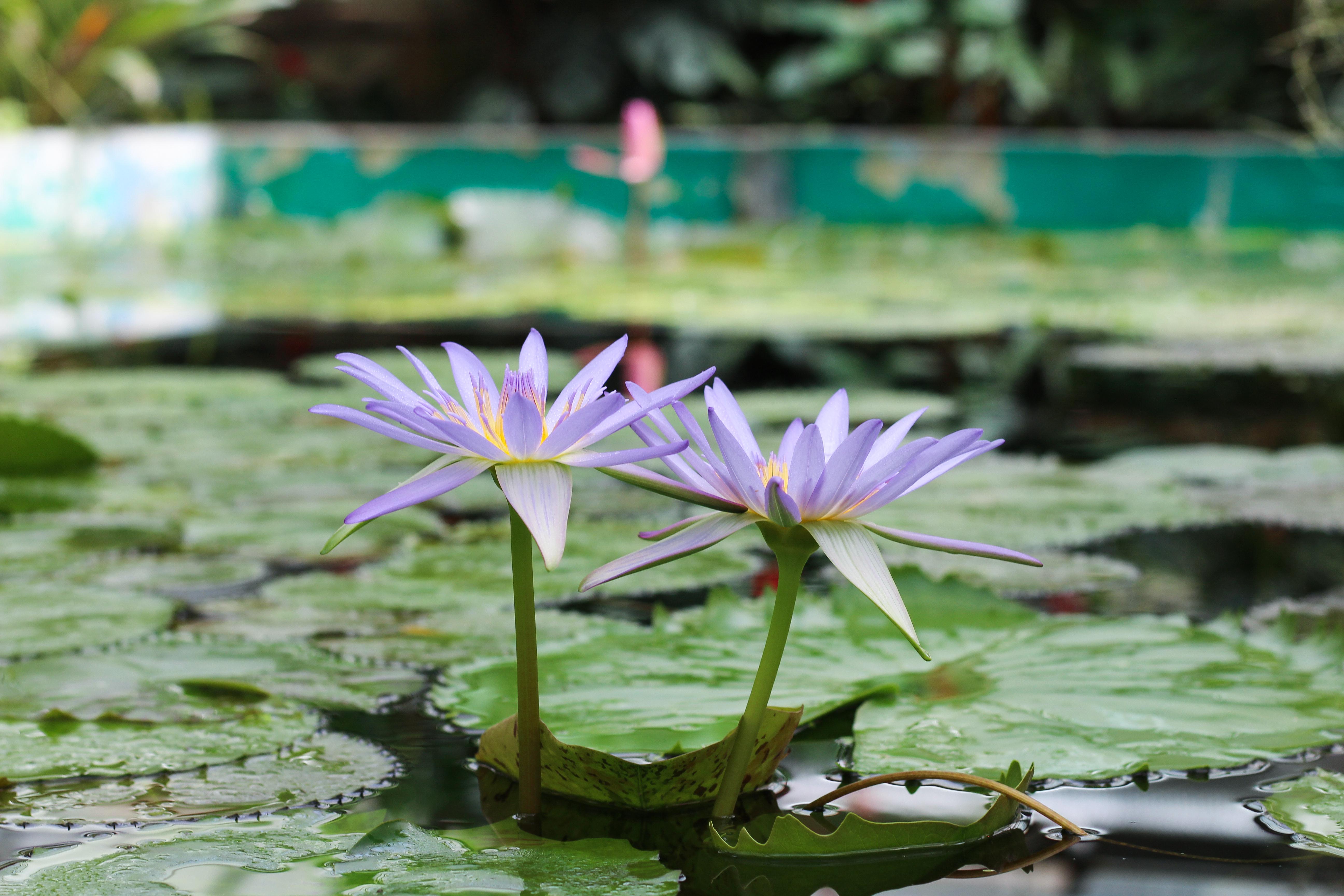 water flower garden