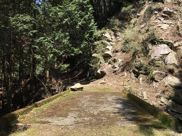 野登山 ミツマタの森ルート 林道 石橋