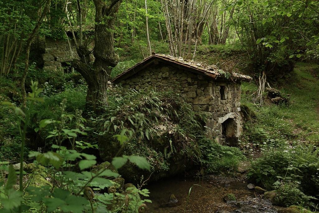 Deep in the woods VIII