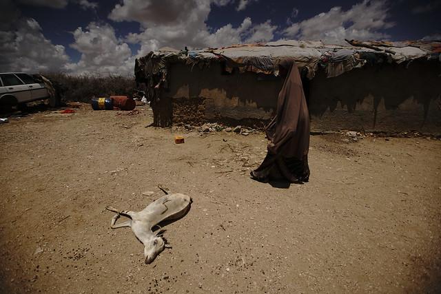 Aid Zone Somaliland