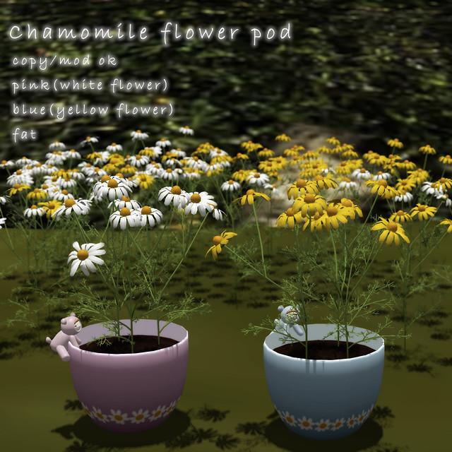 *NAMINOKE*Camomile Flower Pods