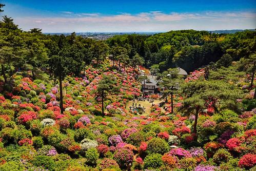 Shiofune Kannon temple Azalea Festival 2017 58