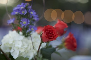 Flowers and Bokeh