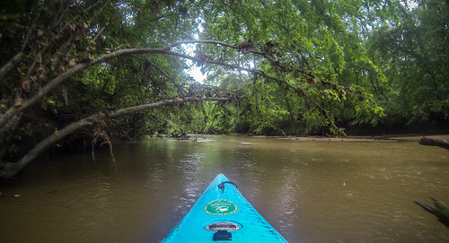Long Cane Creek with Lowcountry Unfiltered-27