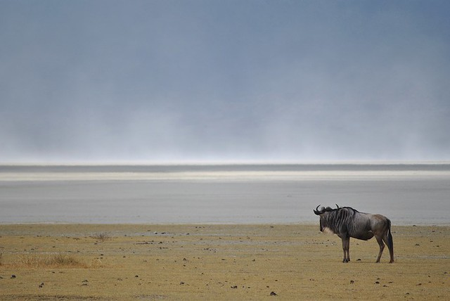 Ngorongoro National Park 2
