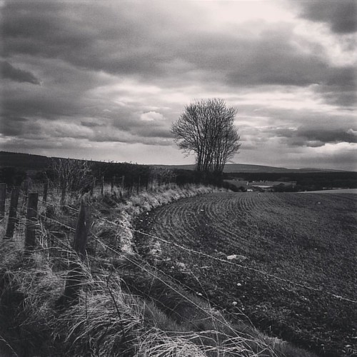 Clochan,  Scotland . #blackandwhite #blackandwhitephotography #monochrome #landscape #tree #field