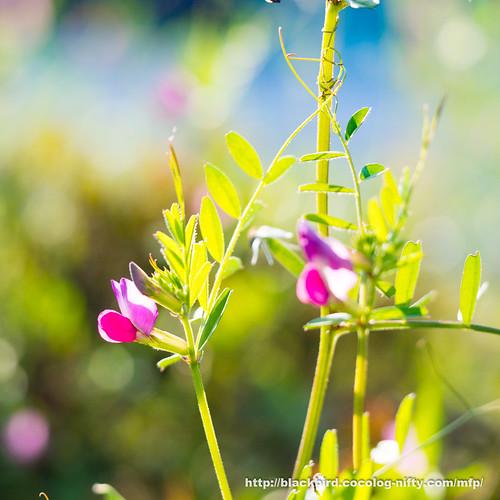 Flowers 20170428 #02