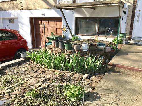 Garden update: three weeks later!