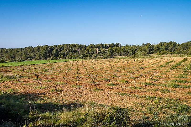 Campos de frutales en Cunit
