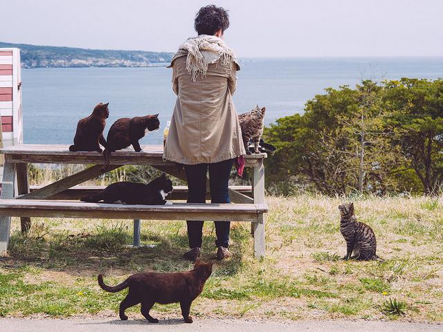 Gatos isla tashirojima