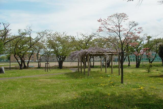 A school garden