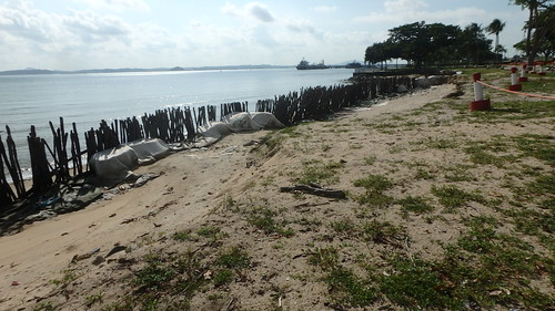 Oil-covered stakes at Changi Point