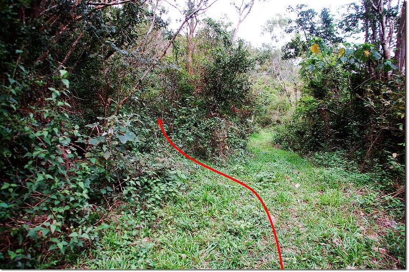 八瑤山土泥產道岔路
