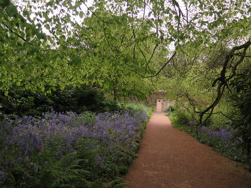 The path through the bluebell woods