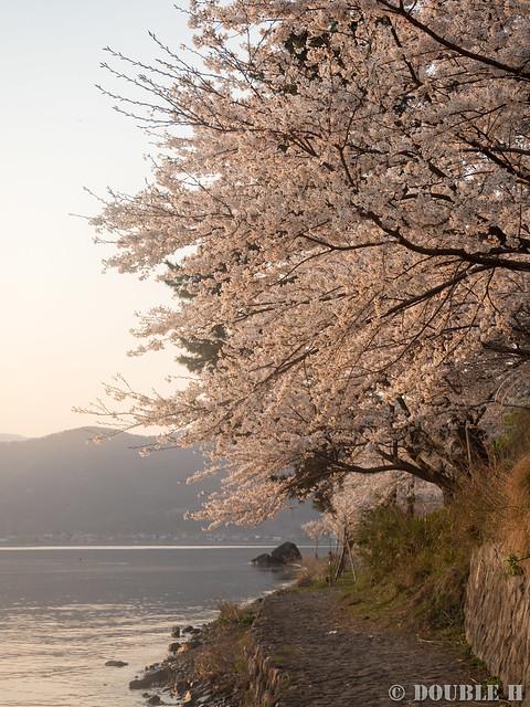 Kaidu-Osaki at 2017 Spring (23)